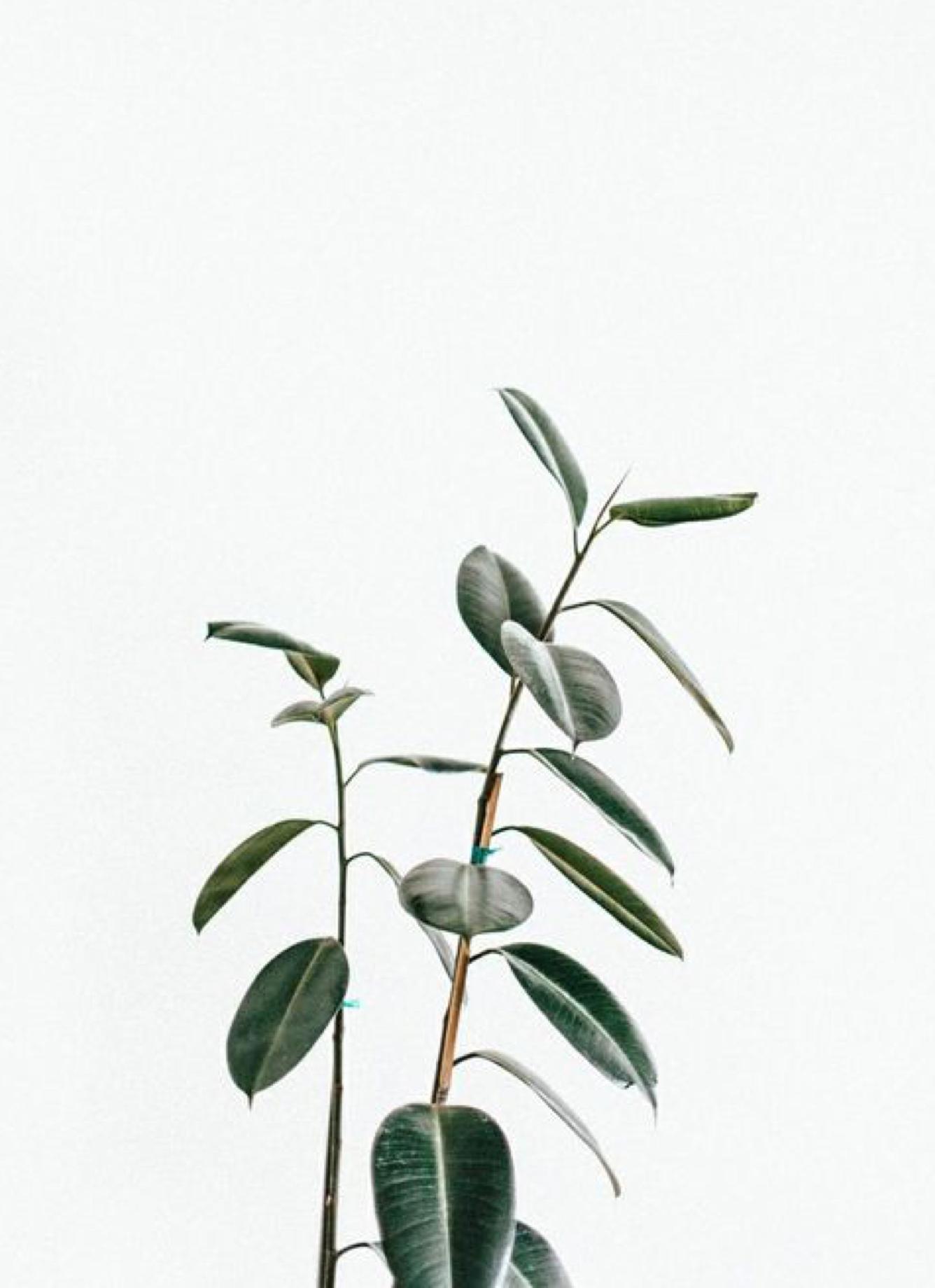 Photographie illustrant le projet Rebranding : less is more